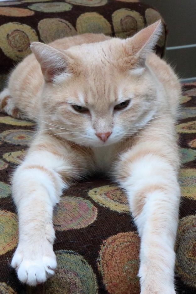 20150115_cats_0828