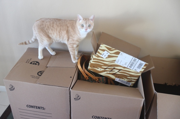 cat Frankie on box