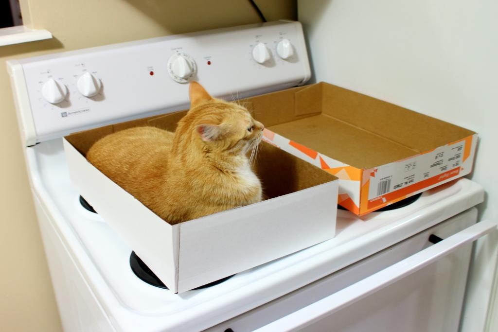 cat Chris in box