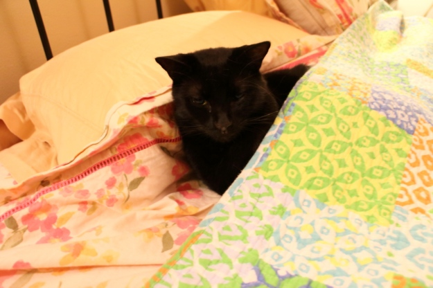 Our cat Puck under the sheets on our bed