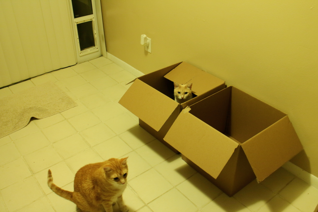 cats Chris and Frankie in box