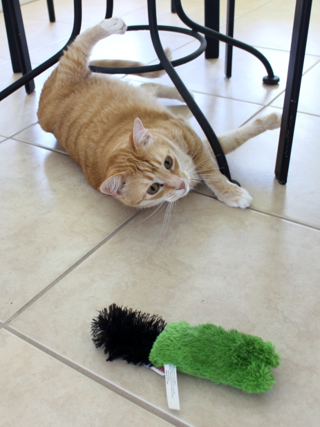 Bad Cat Chris playing with toy