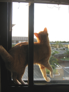 Bad Cat Chris tries to catch bird