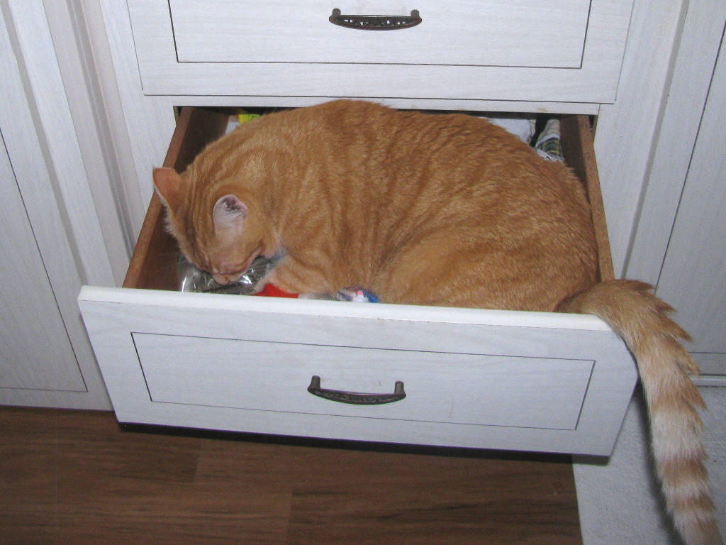 Bad Cat Chris in drawer after catnip