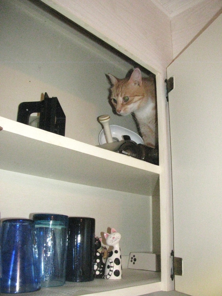 bad cat chris in cabinet