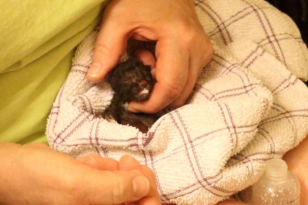 Newborn Kitten Rescue (3/3)