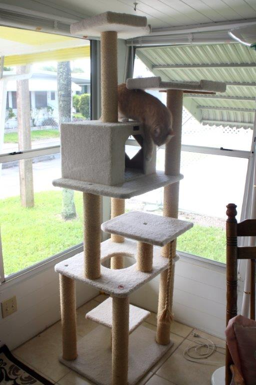 Frankie and Chris playing on new cat tree
