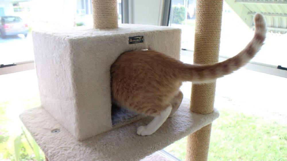 Our New Cat Tree (2/6)