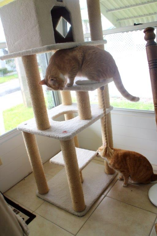 Our New Cat Tree (3/6)