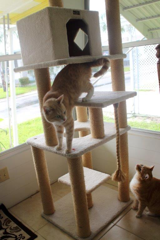 Our New Cat Tree (4/6)