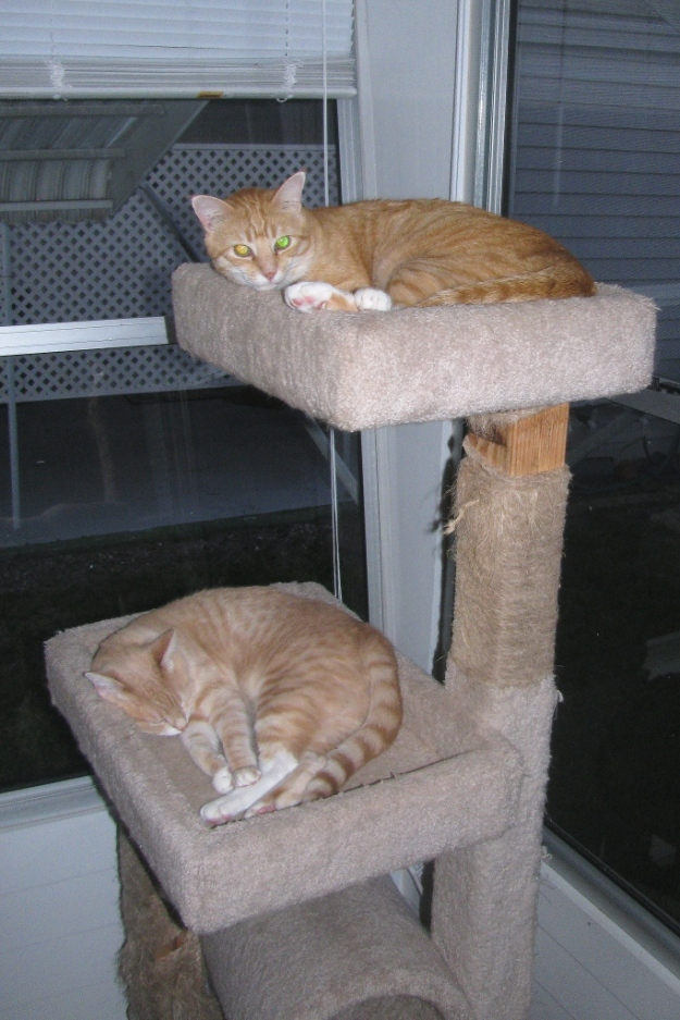 Chris and Frankie on cat tree.