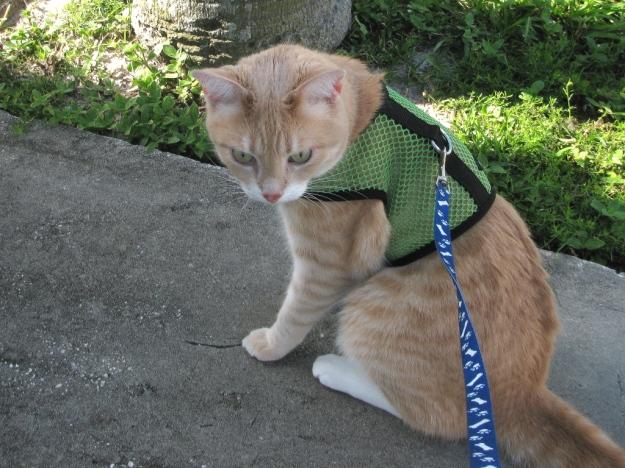 Cat Frankie outside