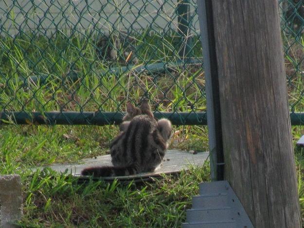 Feral cat