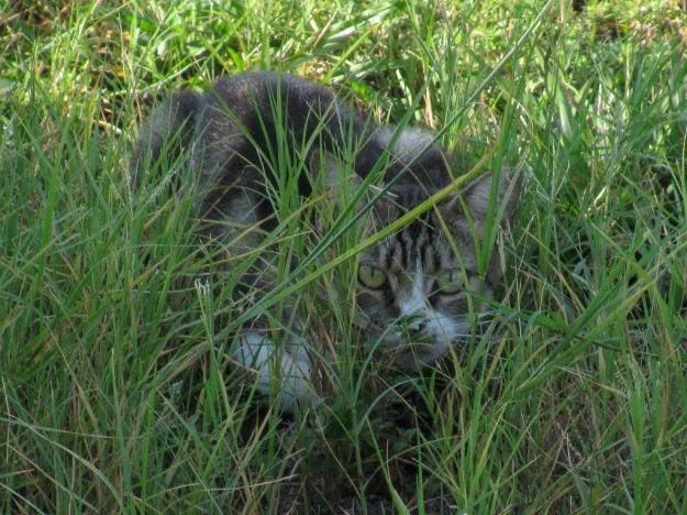 20150706_Feral cat_1809