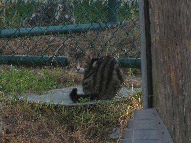 20150714_Feral cat_851