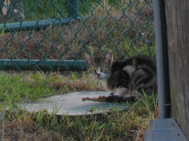 20150716_Feral cat_852