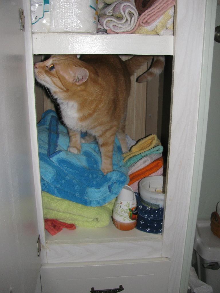cat in towel closet.