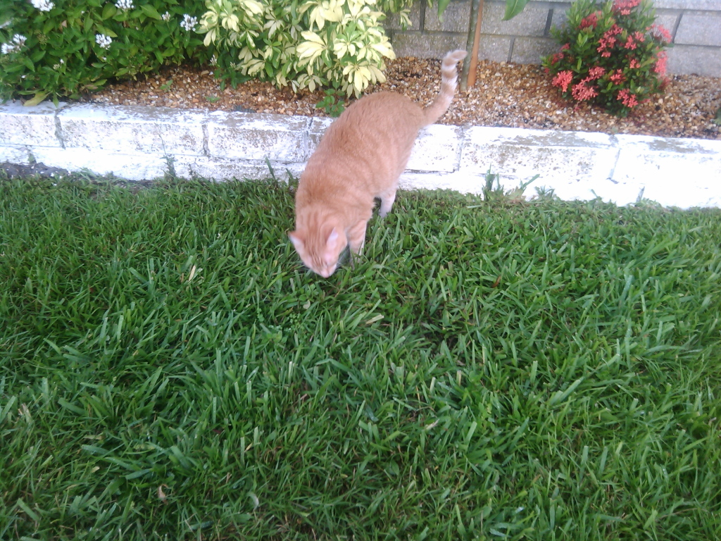 Bad Cat Chris outside