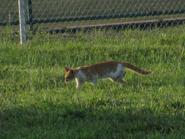 20150807_Feral cats_890
