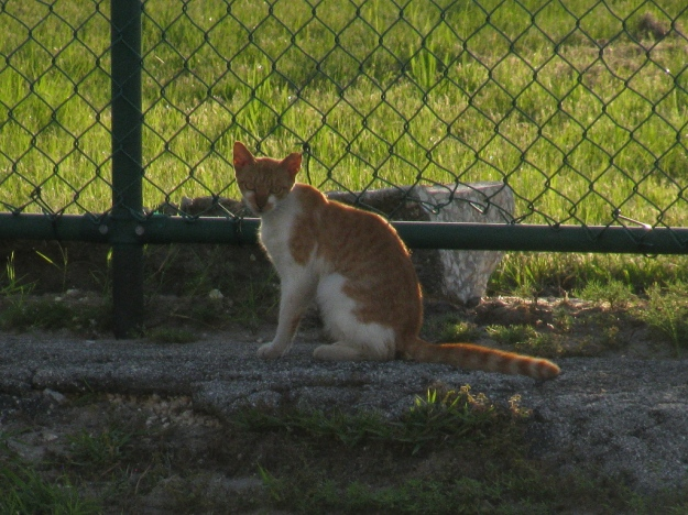 20150807_Feral cats_895