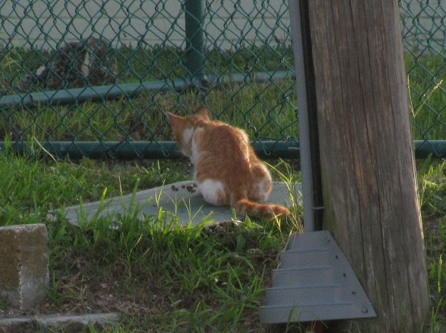 20150807_Feral cats_897
