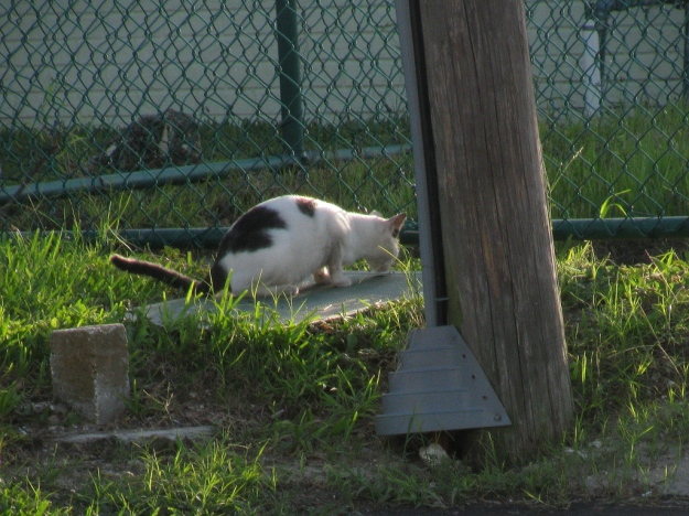 20150807_Feral cats_898