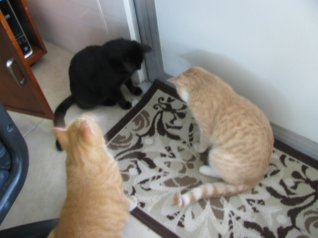 Cats playing with fliy