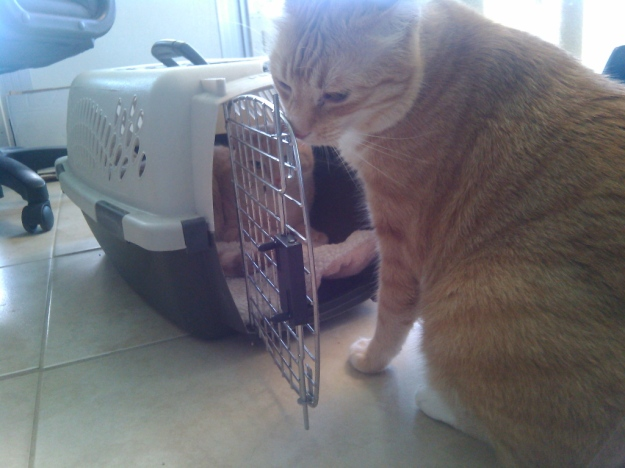 Cats checking out carrier