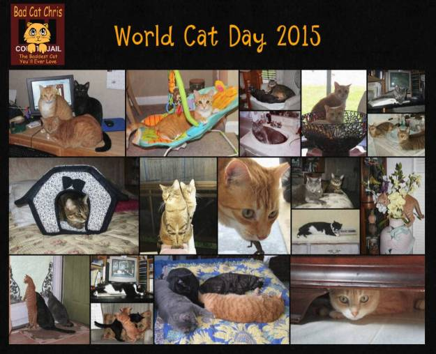 World Cat Day 2015