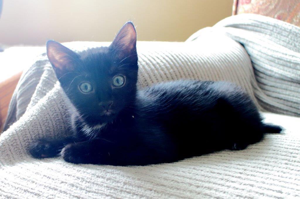 Miss Luis kitten