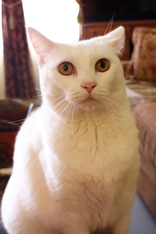 20150905_cat_071