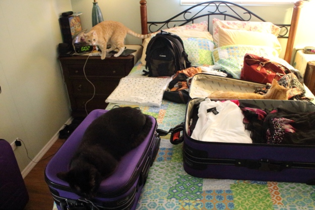 cats on luggage