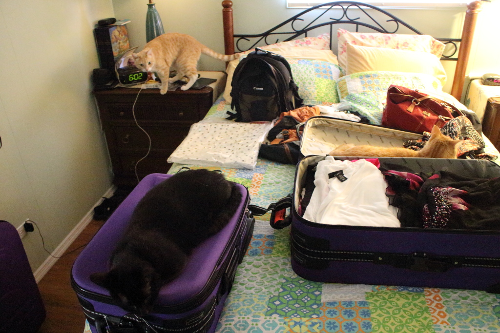 cats and luggage