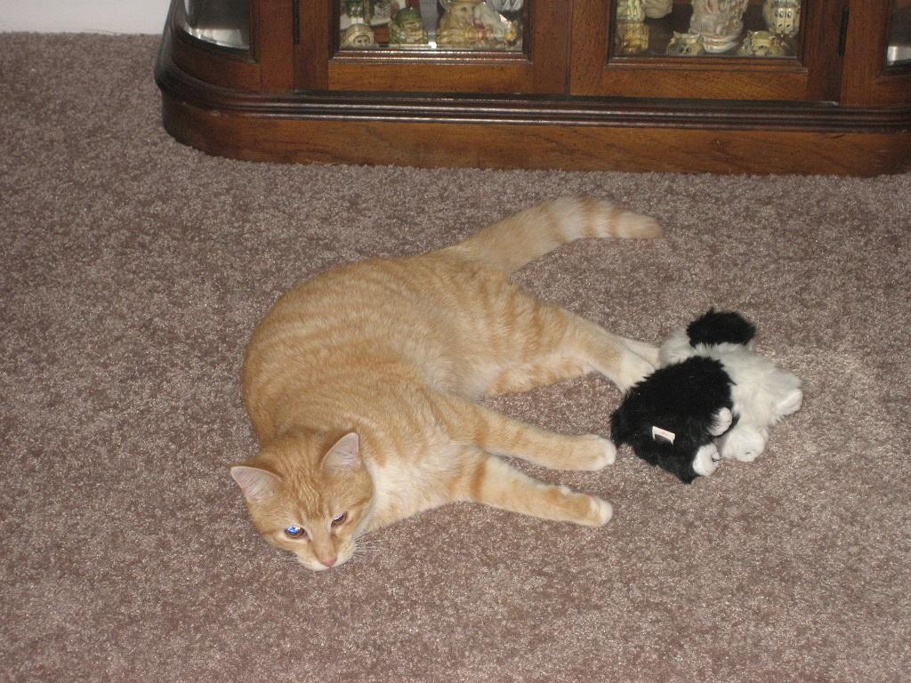 Bad Cat Chris
