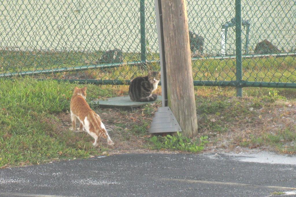 Shy Do Cats Eat Grass