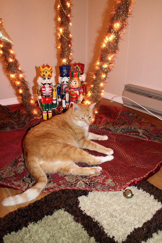 20151122_Cats_3290