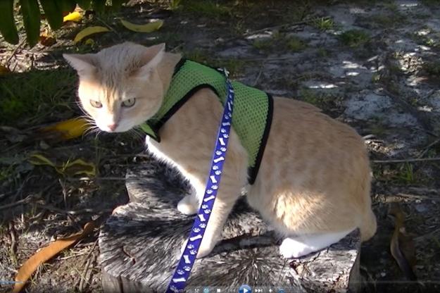 cat Frankie on stump