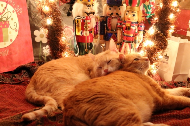 Cats Frankie and Chris under Christmas tree with Nutcrackers