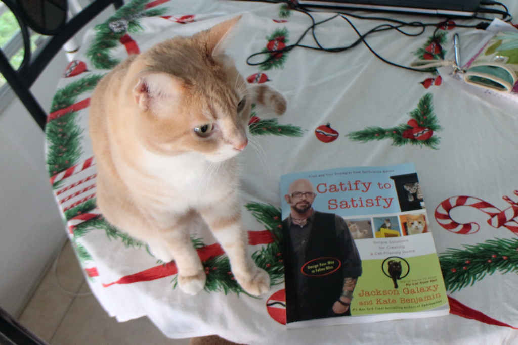 Cat Frankie and book Catisfy to Satisfy