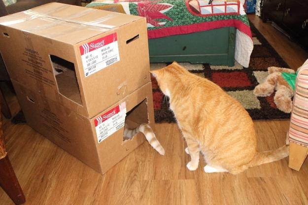 20151212_cats_445