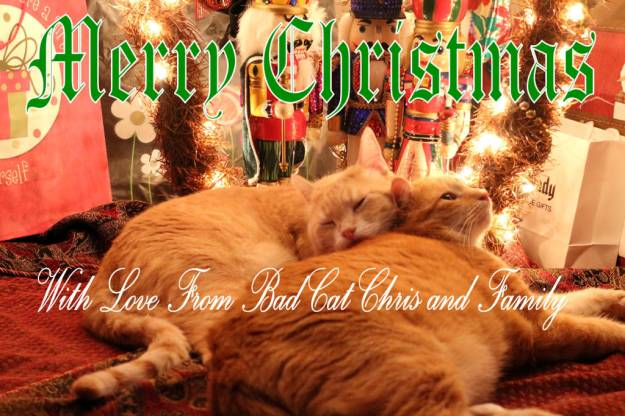 cats merry christmas