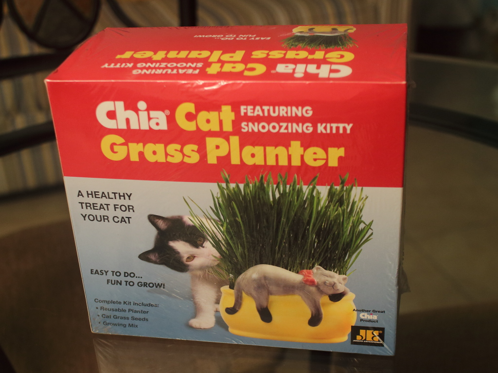 20151226_Cats_3504 - Chia Cat Grass Planter Review Bad Cat Chris