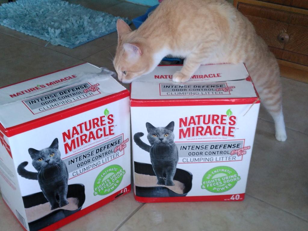 dr elsey cat litter reviews cute cats - Cat Litter Reviews
