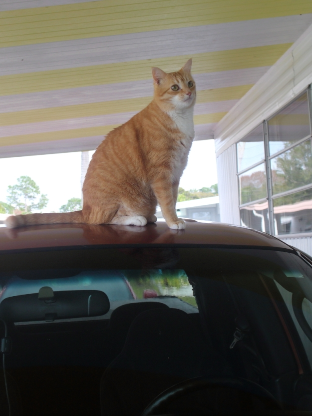 Bad Cat Chris on truck