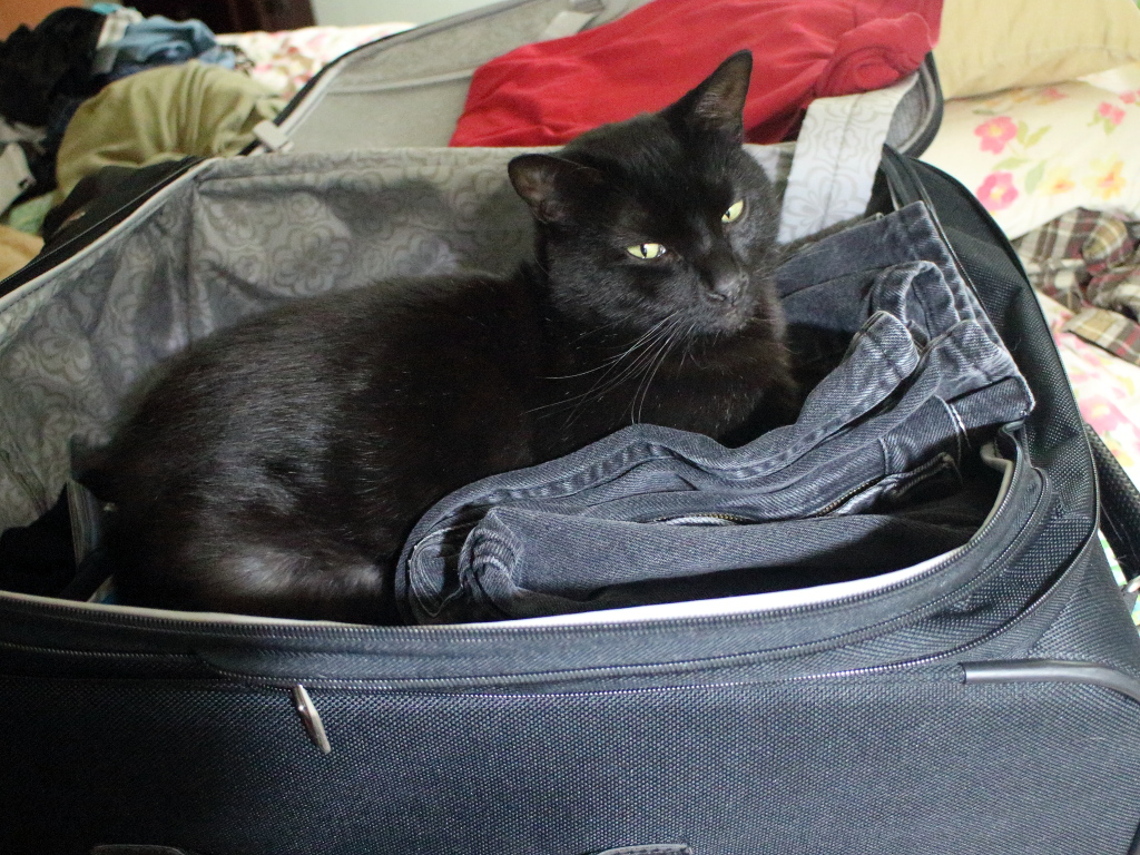 Cat Puck in Suitcase