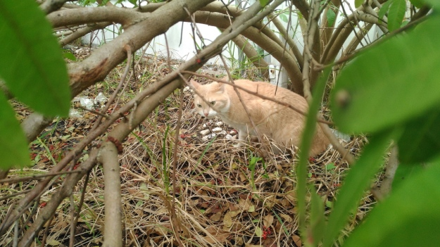 cat Frankie in bushes