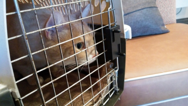 Cat Frankie in carrier