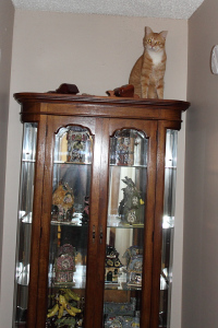 Bad Cat Chris on Curio Cabinet