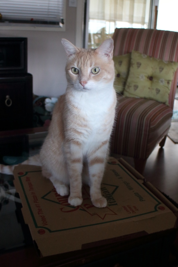Cat Frankie on pizza box