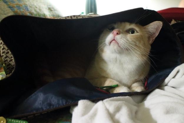 cat Frankie in bag